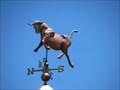 Image for Bull - San Luis Obispo, CA