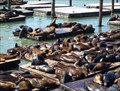 Image for Famous Lounging Sea Lions - San Francisco, CA
