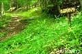 Image for Spring Ridge Trail - Seneca Creek Backcountry - Monongahala National Forest - Western, West Virginia