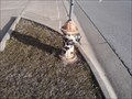 Image for FFD Station 4 Dalmation Hydrant - Fayetteville AR