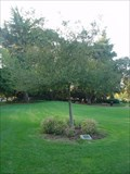 Image for Mountain View Ca, 911 Memorial Tree