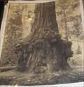 Image for Animal Tree - Boulder Creek, CA