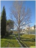 Image for L'arbre mangeur de voie ferrée - La Bouilladisse, France