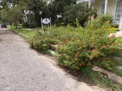 Most waymarkers probably know what a carriage step or carriage block is.  This is not a good picture because of the flowers. It is the one that this B&B is named for so it is the picture that is going with this waymark.  Hopefully someone else will visit, maybe during the winter and get a better photo.  (For you non-Texas residents, there are two days of winter and they are usually not together)