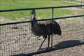 Image for Abrams Animal Farm/1661 Farm and Gardens - New Shoreham, RI