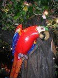 Image for [GF] The Rainforest Cafe Gift Store Macaw
