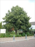 Image for Millennium tree - Oudewater, the Netherlands