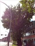 Image for Alte Eiche (Quercus robur) - Hamburg, Deutschland