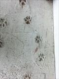 Image for Dog traces - Kopana, Czech Republic