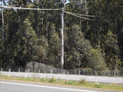 Zoomed view, looking north across the Oxley Highway, at the rope bridge. 1026, Sunday, 23 September, 2018