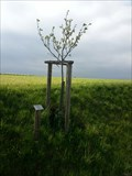 Image for Dedicated Trees-Appletree 'Klarapfel' - 96352 Effelter/Germany/BY