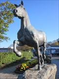 Image for Welsh Cob Stallion, Alban Square, Aberaeron, Ceredigion, Wales, UK