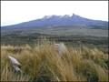 Image for GG (Kaimanawa SD), Desert Road. North Island. New Zealand.