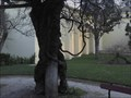 Image for Parque D. Carlos I-Caldas da Rainha-Portugal