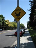 Image for Duck Crossing - Buckingham Dr - Santa Clara, CA