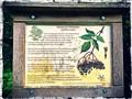 Image for Information Plaque - Black Elder, Schnaitheim, Germany