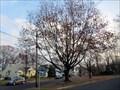 Image for Liberty Tree - Hi-Nella, NJ