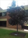 Image for Michael J. Sbanotto - John Brown University - Siloam Springs AR