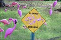 Image for Flamingo Crossing, Crane Lake, MN