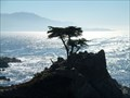 Image for Standing before the Lone Cypress  -  Pebble Beach, CA