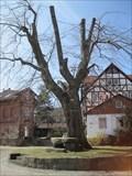 Image for Alte Gerichtslinde Vollmarshausen, Lohfelden, HE, D
