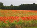 Image for Champ de Coquelicots - Avilly-Saint-Léonard (Oise)