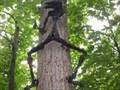 Image for Loup-Garou sur l'arbre.Boisbriand,Québec