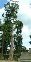 Image for Eucalyptus obliqua do Jardim Botânico - Coimbra/Portugal