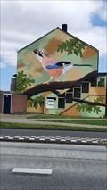 Image for Jay / Vlaamse Gaai - Waalwijk, NL