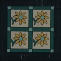 Image for Four-Square Flower / Sunflower -  Wincrest Angus, Johnson City, Tennessee