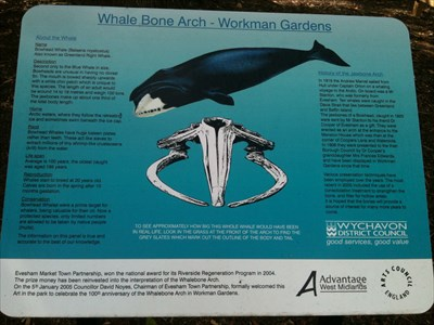 Information on the ecology of the whale and the history of the jaw bones.