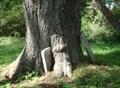 Image for Tree embraces gravestone - Dry Creek Cemetery, Moravia, NY