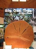 Image for Big Oak Tree State Park Bur Oak - East Prairie, Missouri