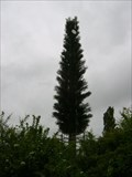 Image for Orange Tree Mast - Letchworth, Hertfordshire, UK