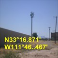 Image for Eastern Canal - Phoenix canariensis