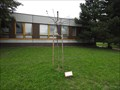 Image for Dedicated Tree - Brno, Czech Republic