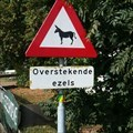 Image for Crossing Donkeys -  Hoogstraten (NL)