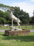Image for The Stag - Sammy Miller Museum, Bashley Cross Roads, New Milton, Hampshire, UK