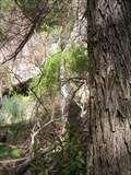 Image for Darwin Falls