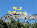 Image for Wild Chipmunk - Lakeside, CO