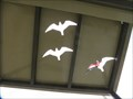 Image for Bird Identification, Jim Hamm Nature Area - Longmont, CO