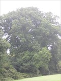 Image for Merley Oak Tree - Merley, Near Wimborne Minster, Dorset, UK