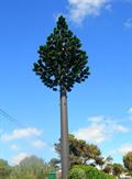 Image for Pine tree  Atlântico Golfe Hotel, Óbidos  Portugal