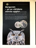 Image for The Eagle Owl - Falun Gruva - Falun, Sweden