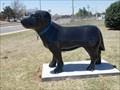 Image for Pet Center Canine - Edmond, OK