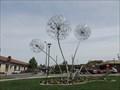Image for Allium Spring Chorus - Coeur d'Alene, Idaho