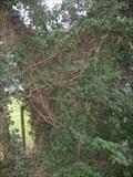 Image for Willow Tree - Lavendon Grange, Buckinghamshire, UK