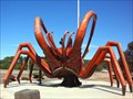Image for Giant  Crayfish -  Dongara,  Western Australia