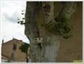 Image for Le platane et les PTT - Mallemort en Provence, France