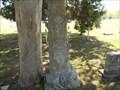 Image for Haywood Disney - Lone Elm Cemetery - Claremore, OK